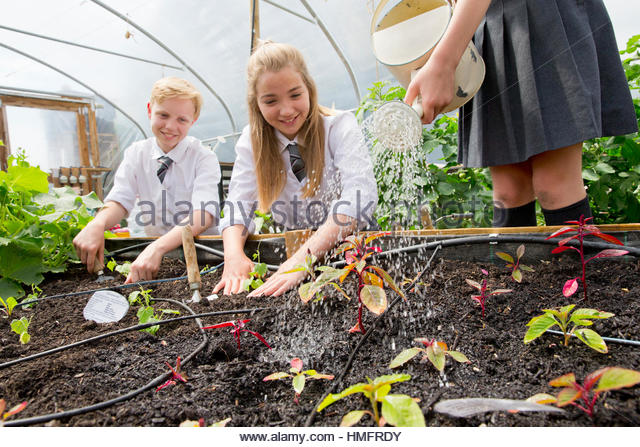 Middle school students with watering can watering plant seedlings in greenhouse - Stock Image