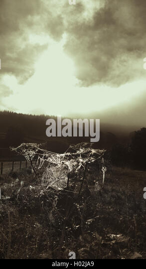 moody autumnal landscape with cobwebs on plants - Stock Image