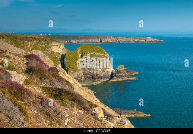 UK, Wales, Anglesey, Holy Island, near South Stack Lighthouse - Stock-Bilder