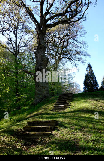 Staircase in grass under old oak tree. - Stock Image