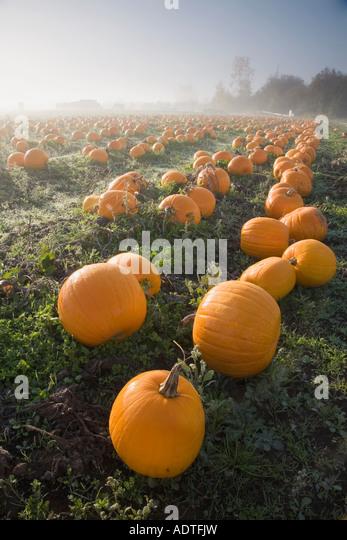 pumpkin farm shropshire