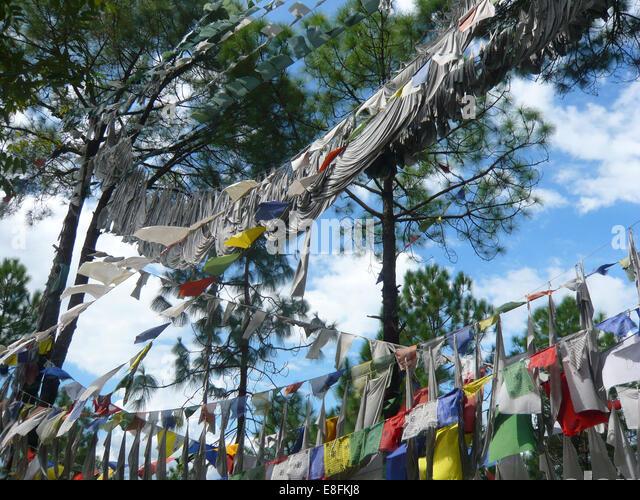 Tibetan Prayer Flags hanging in trees, Himachal Pradesh, India - Stock-Bilder