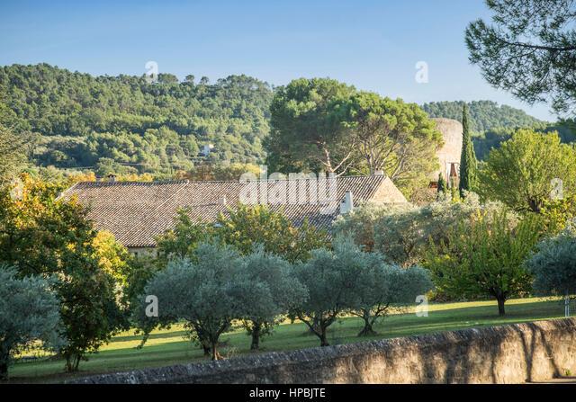 Fince, Olive trees, Lourmarin, Provence, France - Stock Image