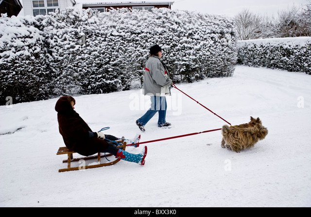 Woman Walk Dog Christmas Stock Photos & Woman Walk Dog ...