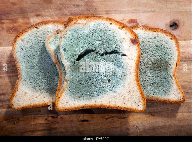 which type of bread gets mold faster, wheat or white