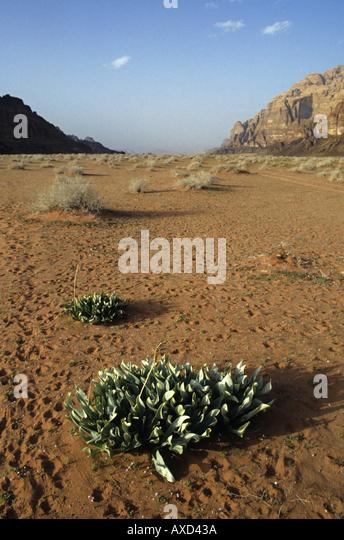 Wadi Rum desert, Jordan. - Stock Image