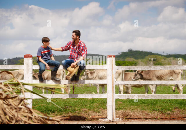 Everyday life for farmer with cows in the countryside. Peasant work in South America with livestock in family country - Stock Image