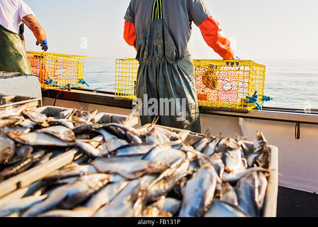 Two fishermen throwing lobster traps - Stock Image