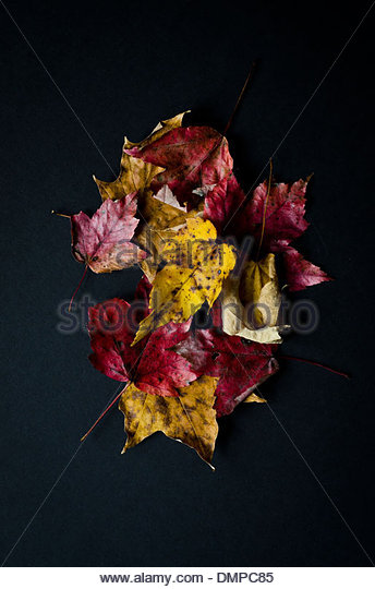 Small pile of colorful autumn leaves on black background. - Stock Image