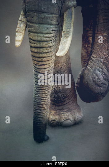 elephants trunk - Stock-Bilder