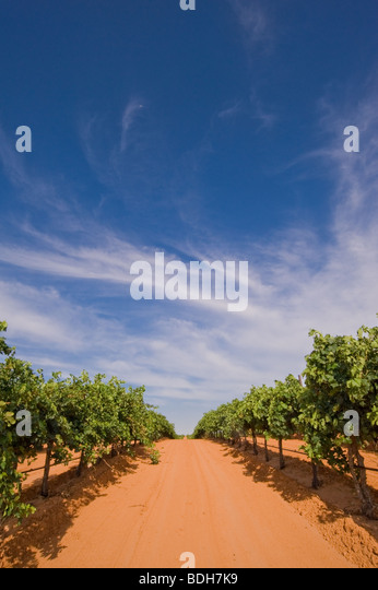 newsom-vineyards-in-yoakum-county-just-o