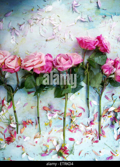 a poetic floral montage of roses, - Stock Image