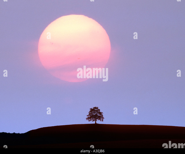 DE - BAVARIA: Sun setting over single tree - Stock Image