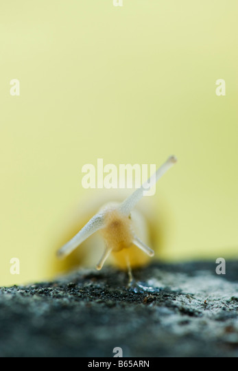 Snail excreting mucus, close-up - Stock-Bilder