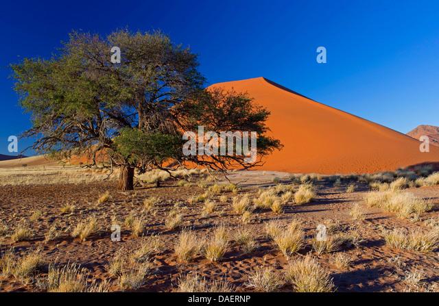 Namib desert in Namibia, dune 45, Namibia, Namib Naukluft National Park, Sossusvlei, Sesriem - Stock Image