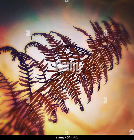 Autumn Bracken - Stock Image
