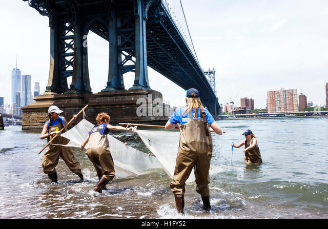 New York New York City NYC East River Brooklyn Dumbo Brooklyn Bridge Park Conservancy environmental education aquatic - Stock Image