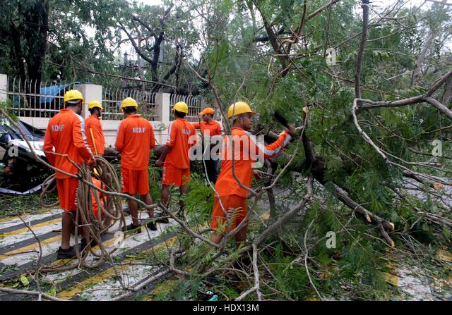 Members of the Disaster Response Force (NDRF) removing trees that came in the path of Cyclone Vardah, lie uprooted - Stock-Bilder