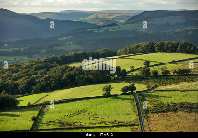Cattle in a field on Callow Bank  below Stanage Edge from Millstone Edge, nr Hathersage, Derbyshire Peaks District - Stock-Bilder