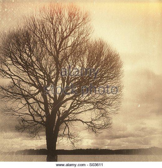 Brown tree - Stock Image