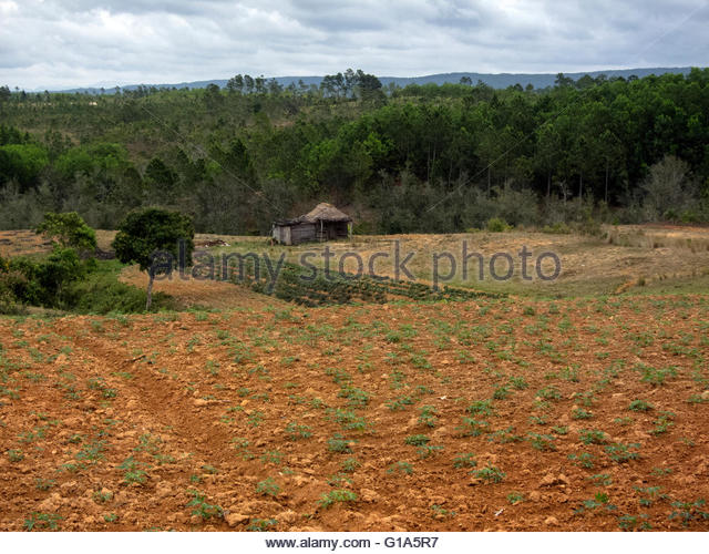 Vinales Valley, UNESCO World Heritage site, Tobacco growing in field, house in distance, Cuba © IndyFoto - Stock Image