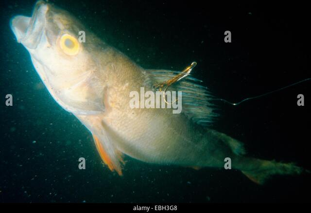 Hook jpg stock photos hook jpg stock images alamy for Fish n hook