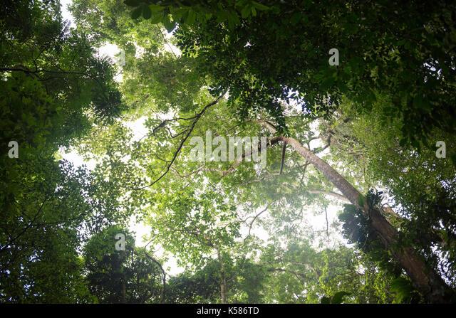 Rainforest of Ilhabela State Park in SE Brazil - Stock Image