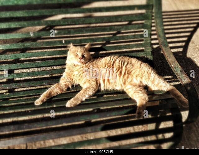 Feral cat basking in sun on public bench - Stock Image