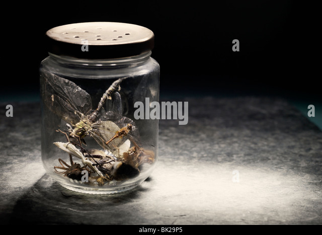 Insects in jar - Stock Image