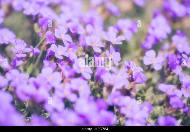Flowers in sunset - Stock Image