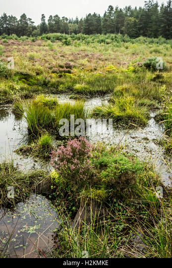 Wet, soggy moorland at the restored Culloden Battlefield near Inverness, Scotland, UK - Stock Image