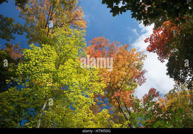 Autumn colours  in the woods near Grace Lake, Killarney Provincial Park, Ontario, Canada - Stock-Bilder