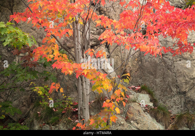 Autumn colours fringing Frood Lake, nr Whitefish Falls, Sudbury District, Ontario, Canada - Stock-Bilder