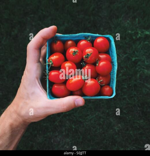 Hand with red tomatoes - Stock Image
