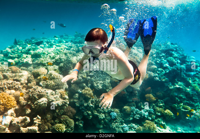 Snorkeler diving along the brain coral - Stock Image