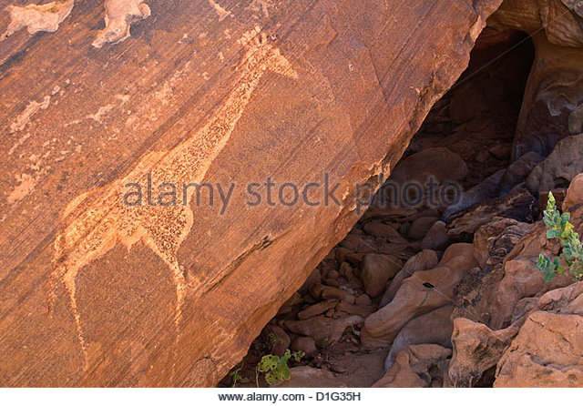 Bushmen petroglyph of giraffe, Twyfelfontein rock art site, Damaraland, southern Kaokoveld Wilderness, Namibia, - Stock Image