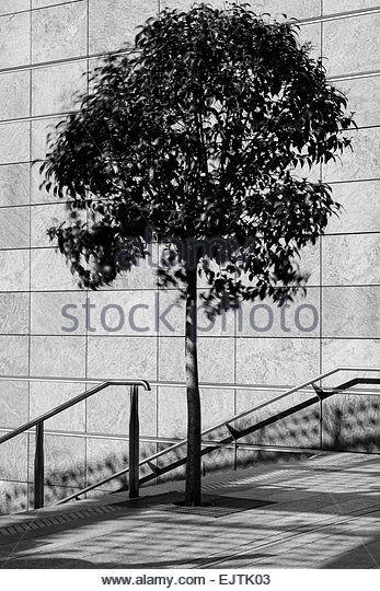 Tree imprisoned by concrete - Stock Image