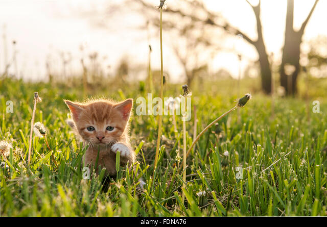 Kitten in tall grass - Stock Image