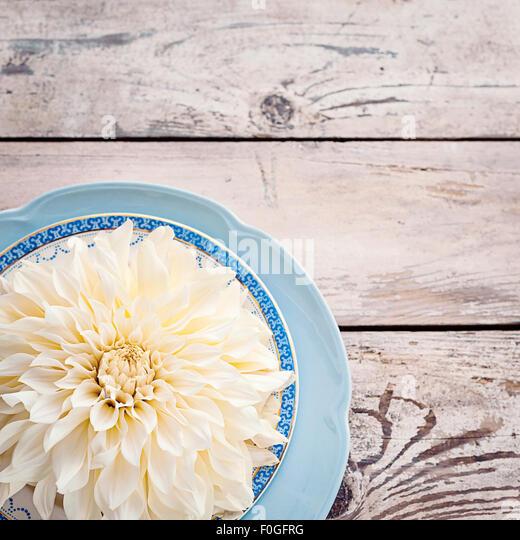 ivory dahlia on vintage plates - Stock-Bilder