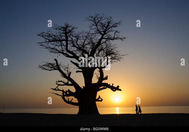 Baobab tree and couple walking, Sine Saloum Delta, Senegal, West Africa, Africa - Stock Image