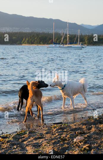 Hadden Park Dog Beach