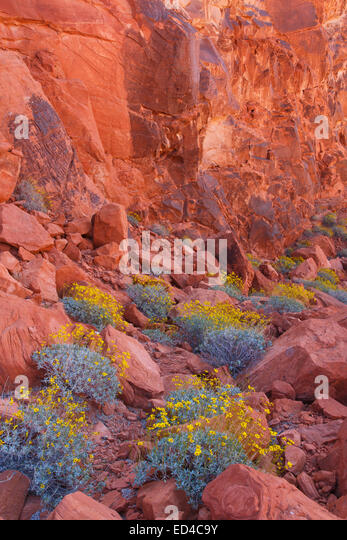 Valley of Fire State Park, near Las Vegas, Nevada. - Stock Image