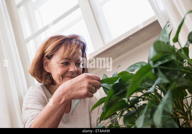Senior woman examining plant leaves, Munich, Bavaria, Germany - Stock-Bilder