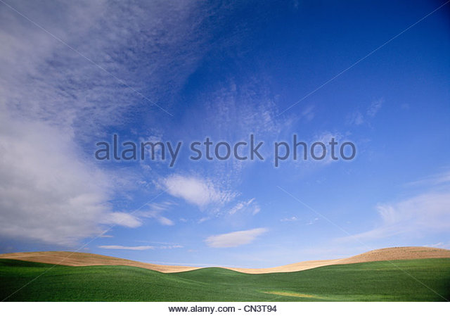 Wheat fields, Palouse, Washington, USA - Stock Image