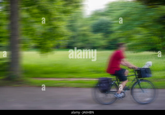 A tiny Maltese puppy rides as a passenger on a bike clearly enjoying the ride - Stock Image