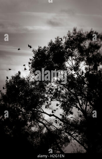 Birds flying and dark silhouette of tree. Moody and ominous nature scene. - Stock-Bilder