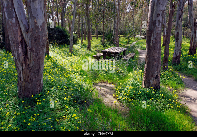 Yellow spring meadow flowers in a woodland glade in Selinunte, Sicily, Italy - Stock Image