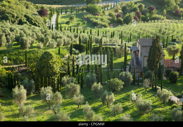 Olive groves and Italian Cyprus trees are seen at sunset in the Medieval Umbrian town of Orvieto. Italy. - Stock Image