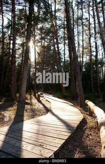 Wooden path in a Bavarian forest - Stock-Bilder
