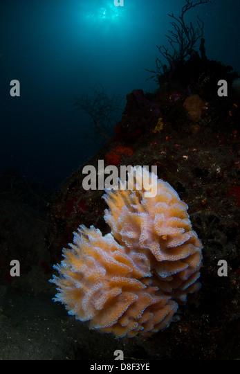 Vase Sponge Stock Photos Amp Vase Sponge Stock Images Alamy